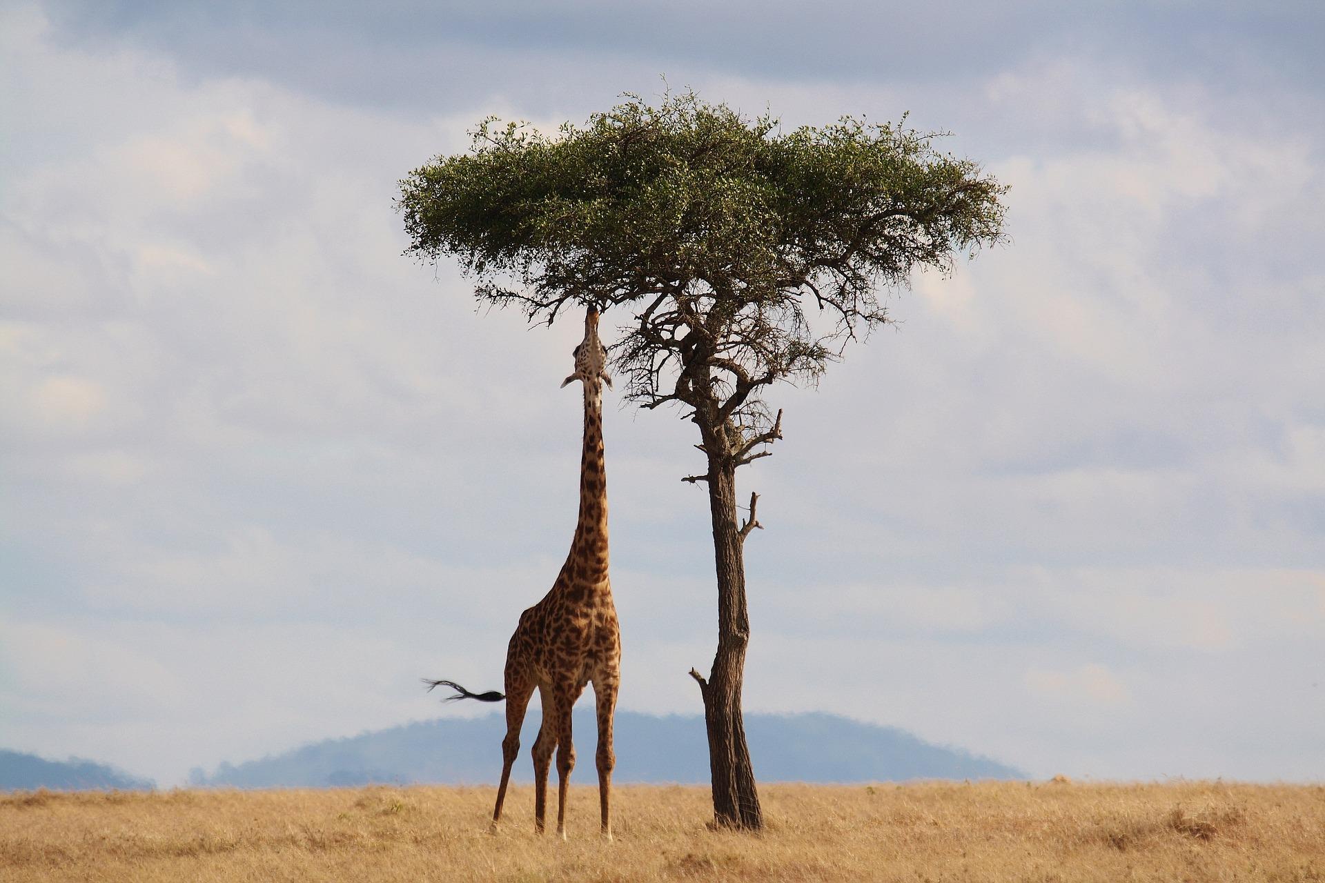 , Kenia, Travelguide.at