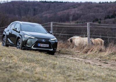 , Test: Lexus UX 250h    | 2020, Travelguide.at